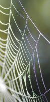 spiderweb X by linedal