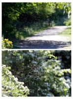 Day 248 - Swarm by TakeMeToAnotherPlace