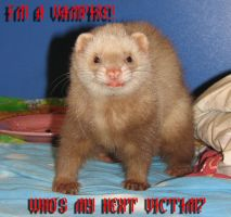 Meet Martini, the vampire ferret! by Panda-kiddie