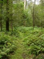 Trail of Green by neuron-dreamtime
