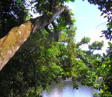 Tree Perspective Suriname by Jenvanw