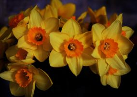Happy Easter..... by awjay
