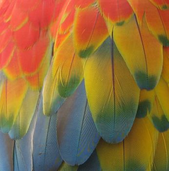 Parrot Feathers by whatategilbertgrape