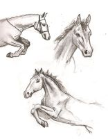 Collection of horses by dawn-is-dead
