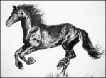 Friesian horse by Ennete