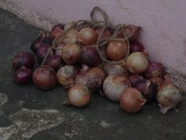 onion stock resources by thewayur