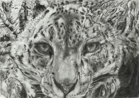 Snow leopard by Anemyr