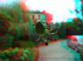 Araneus Diadematus 3D Anaglyph by yellowishhaze
