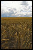 Harvest 2 by Forestina-Fotos
