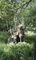 Stock Pic: Troll or Fairy Tree by swandog