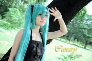 Miku - Canary by Onnies