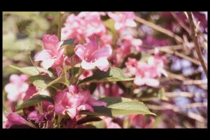 Flowers of May by Mazarde