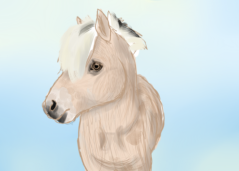 Horse Sketch by Ducera