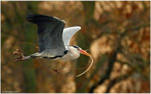 Heron Nest Building by andy-j-s