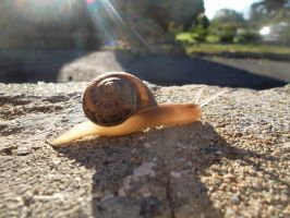 Snail On a Wall by amydrewthat
