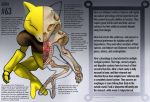 Abra Anatomy- Pokedex Entry by Christopher-Stoll