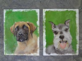 Diesel the mastiff and Frisky the schnauzer by Sweater
