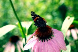 Bokeh and Butterflies II by Resensitized