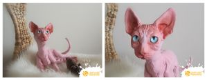 Custom Sphynx Cat Doll by LimitlessEndeavours