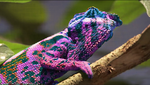 chameleon - wallpaper by NBDA