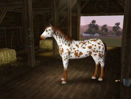 Sims3 Pets Creations Brown Leopard Appaloosa by Senwolf10