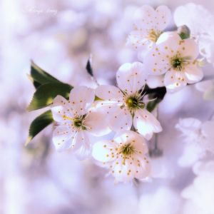 Spring in the heart by M-LorenZ