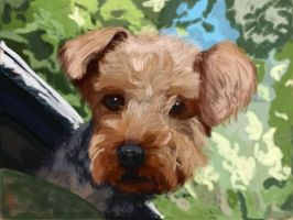 Yorkie poo commisson by Be-Lyle