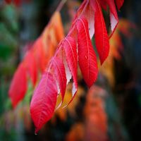 Autumn Leaves by Kaddieee