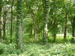 229 - trees by WolfC-Stock