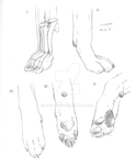 Wolf Paw study by LuckasK
