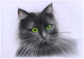 Black green-eyed cat by TenebrisArt