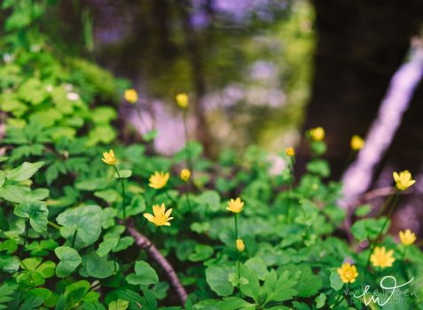 In the Undergrowth by Elenihrivesse