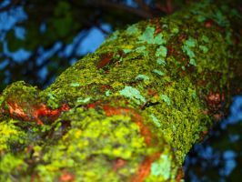 Tree Moss by Eclipsed05