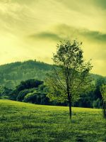 Green field by FrantisekSpurny