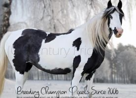 Colored Pony Brook Stables' Contest Entry by CenturyPride
