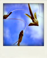 .flyingFish ii by Snapperz