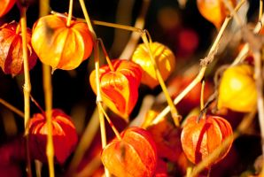 Fireworks of autum 9 by macgl