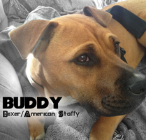 Buddy the Dog 83 by Xbox-DS-Gameboy