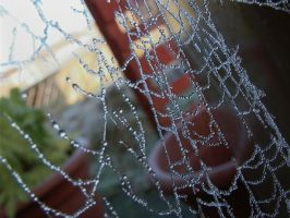 Frosty Spider Web by Tech-Dave