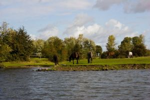 Horses on the meadow 3 by archaeopteryx-stocks