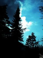 Forest in Kvetnica by cool-tery