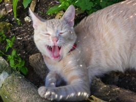 Yawning by Toulouse-and-Co