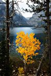 Yellow Tree by Heart-Touch-Images