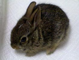 Baby Bunny by Squeegepooge