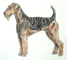 """Dog Breed Challenge - """"A"""" by forgottenones"""