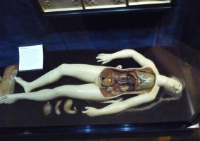 Wax anatomy doll II by Lemondjinn