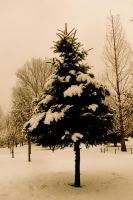 lonely little tree by Lisa-Marie-Eva