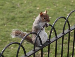 London Squirrel III by kdiff3