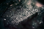 Morning Dew by entangle
