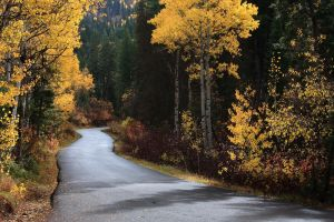 Road to Fall - DA Contest by tourofnature